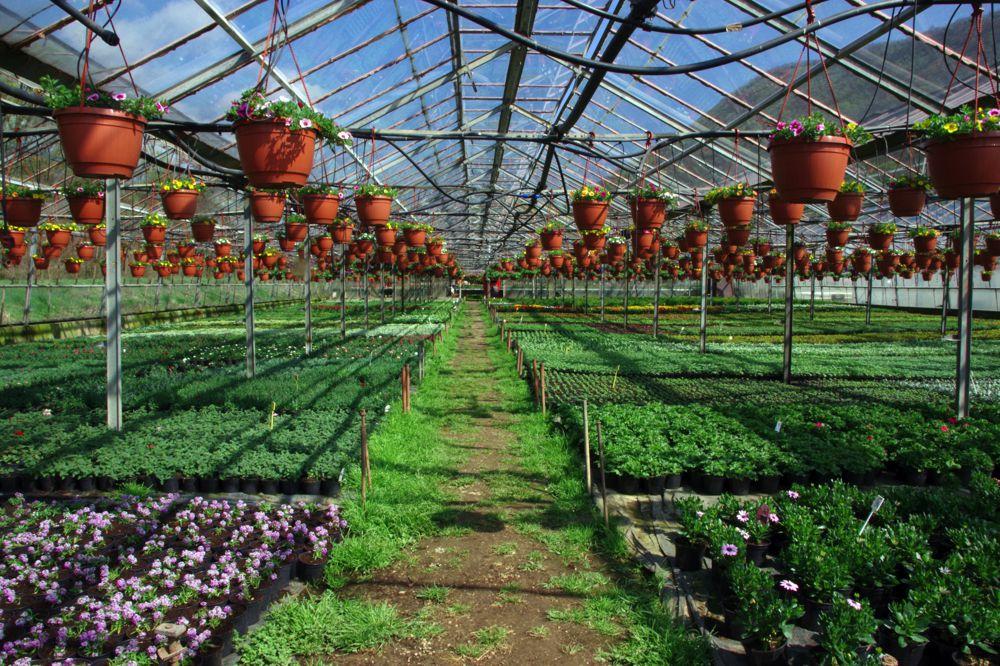 hamelli zahradnictvo 25