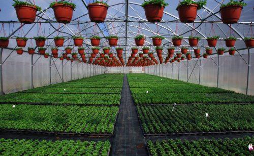 hamelli zahradnictvo 60